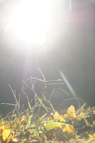 祝福する光