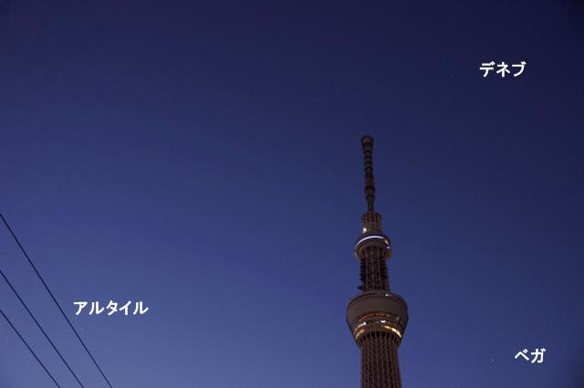 東京スカイツリーと夏の大三角形