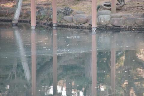 日本庭園の池の氷