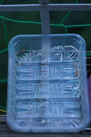 トレーに張った氷
