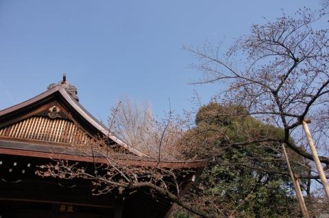 能楽堂の脇の標準木
