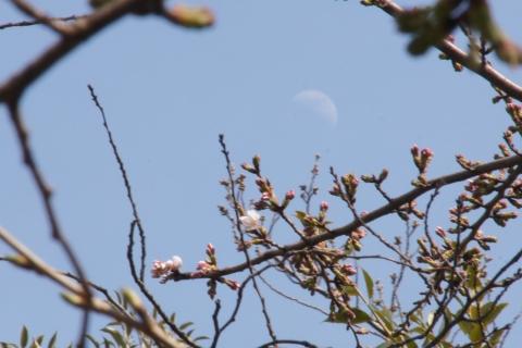 桜と九夜月