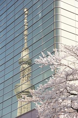 映るスカイツリーと桜