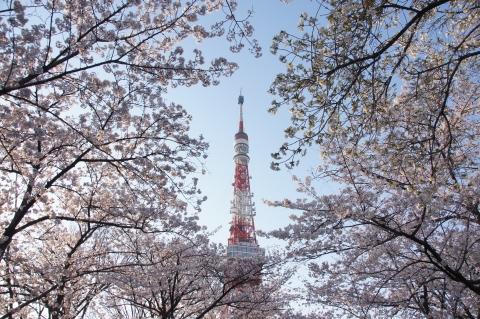 5桜に包まれた東京タワー