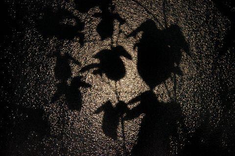 月明かりの下の朝顔