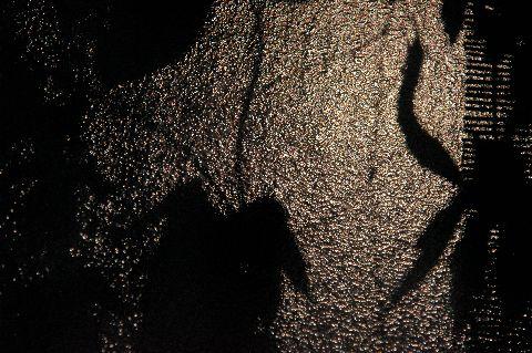 月明かりのゴーヤと朝顔