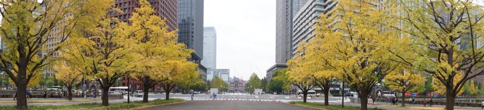 イチョウ並木から東京駅