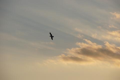 優雅に飛ぶカモメ