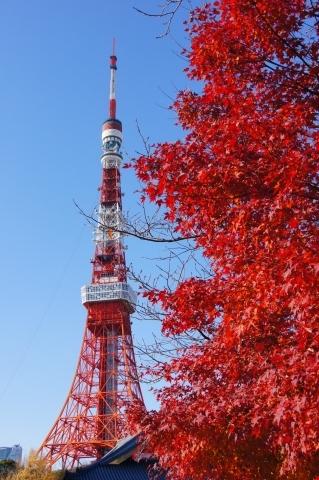 モミジと東京タワー