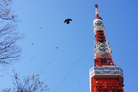 東京タワーと落葉とハト