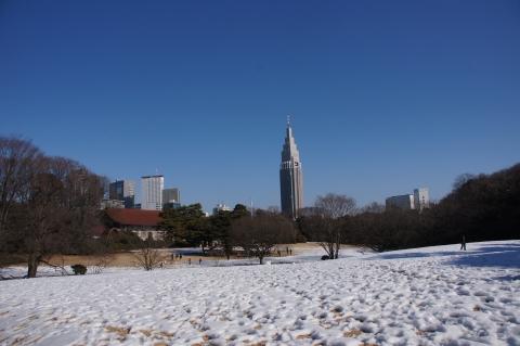 雪に埋もれた明治神宮御苑
