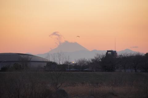 富士山と野鳥