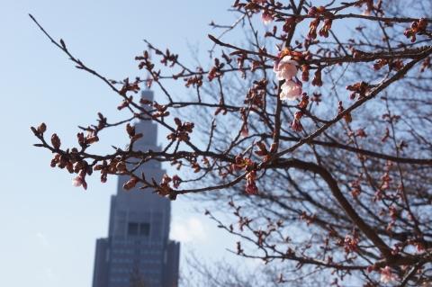 ドコモタワーと寒桜