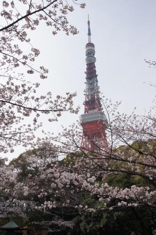 徳川霊廟の桜と東京タワー