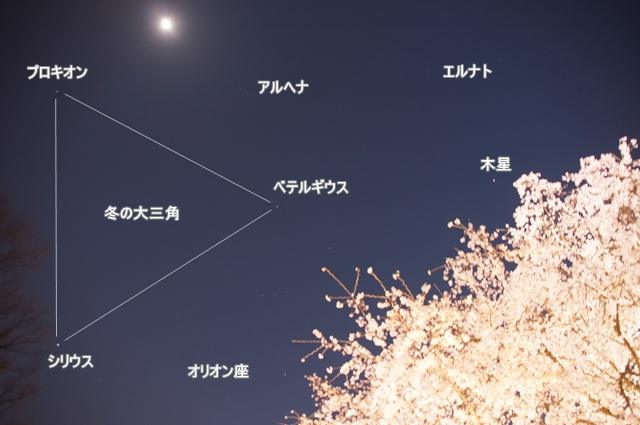 枝垂れ桜と天体