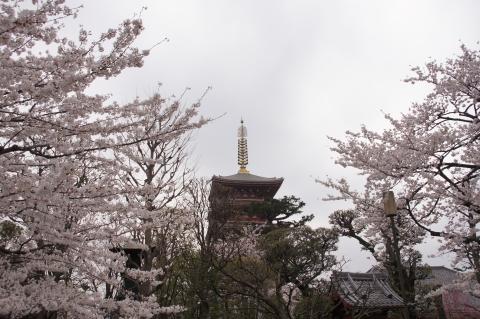 桜に包まれた五重塔