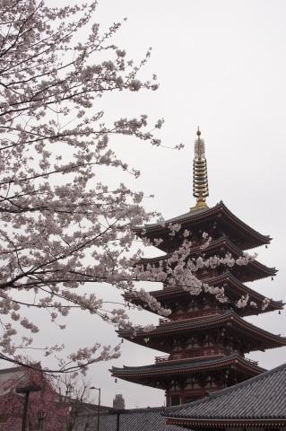 桜と浅草寺五重塔