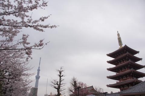 桜と東京スカイツリーと五重塔