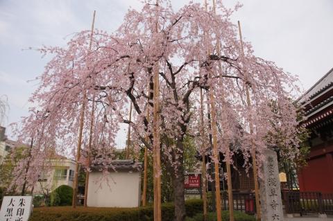 六角堂と枝垂れ桜