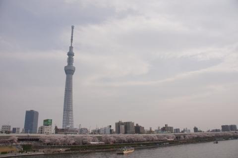 さくら橋から東京スカイツリーと桜