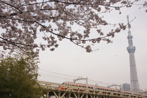 りょうもう号と桜と東京スカイツリー