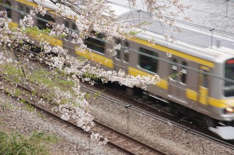 桜吹雪と中央・総武緩行線