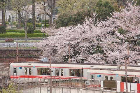 桜と丸ノ内線