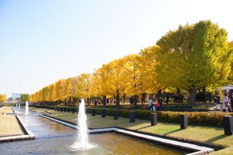 噴水広場前からイチョウ並木2