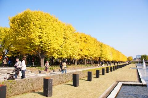 噴水広場前からイチョウ並木1