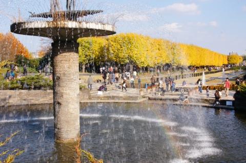 噴水の虹とイチョウ並木2