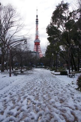 芝公園4号地から見た東京タワー