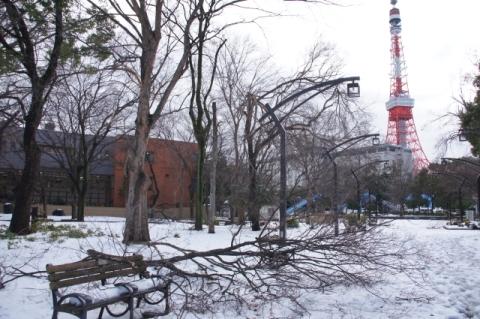 ベンチに横たわる 雪折れの枝