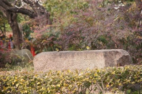石の上のメジロ