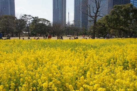 菜の花畑の向こうの東京タワー