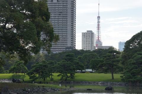 東京タワーを眺める野鳥