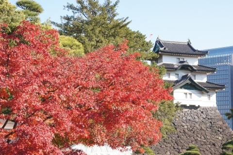 モミジと富士見櫓