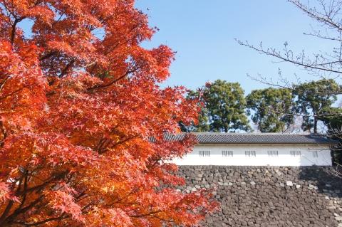 富士見多聞と紅葉