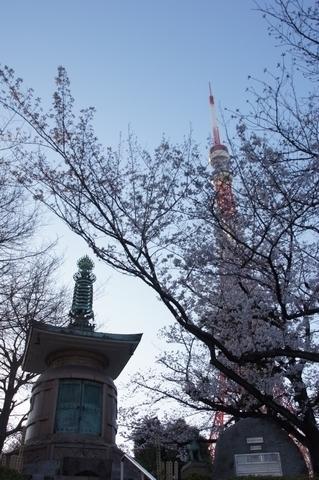 大納骨堂と東京タワーと桜