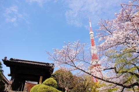 円光大師堂と東京タワーと桜