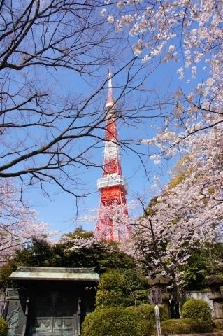 徳川霊廟前から東京タワーと桜