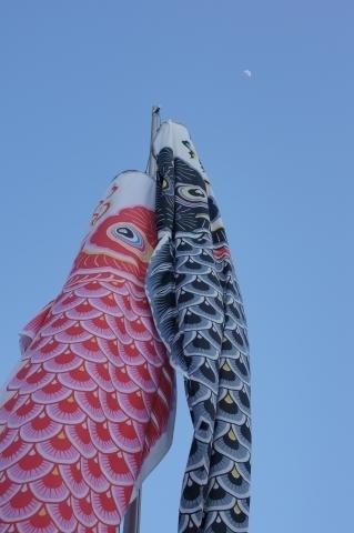 月を目指す鯉のぼり