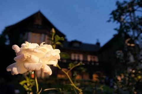 ユキサンという名のバラと洋館