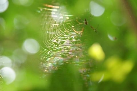 虹色クモの巣