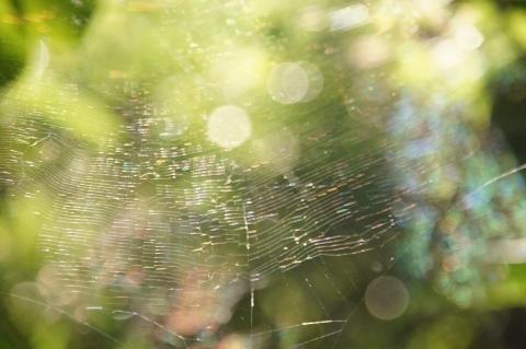 奥のクモの巣に注目