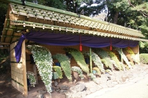 懸崖作り菊花壇