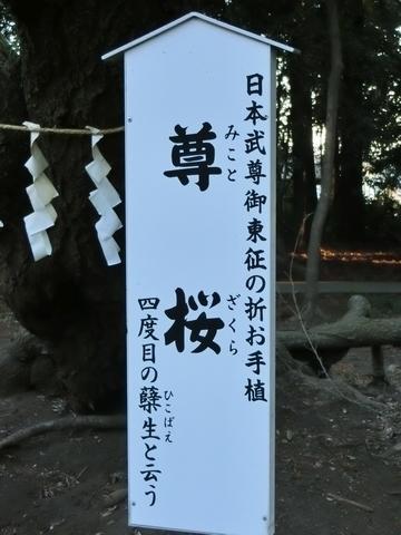北野天神社 尊桜案内
