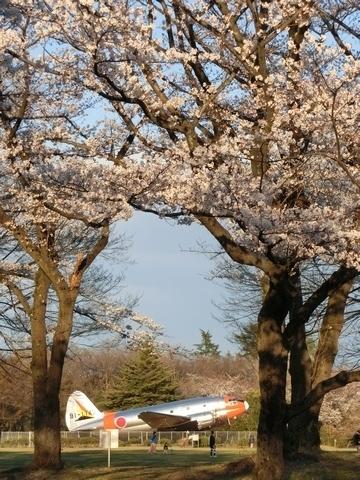 C-46と桜