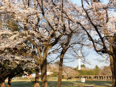 放送塔とC-46と桜