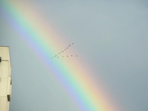 虹を横切る鵜の群れ