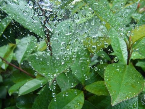 クモの巣にとらえられた雨粒